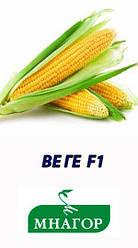 Семена кукурузы сахарной Веге-1 F1 50 семян Мнагор