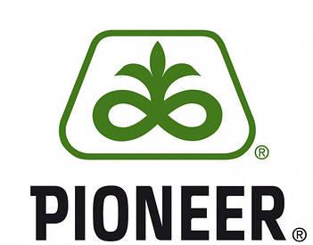 Семена кукурузы пионер (pioneer)