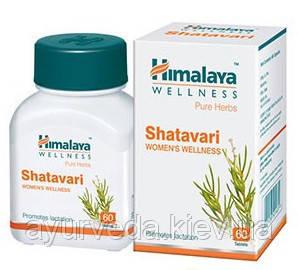 Шатавари, Shatavary - омолаживает женскую репродуктивную систему, нормализует менструальный цикл