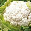 Семена капусты цветной Новария F1 (2500 сем.)