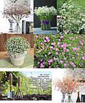 Гипсофила многолетняя. Эти цветы станут прекрасным дополнением декора Вашего дома или сада