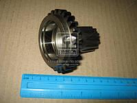 Шестерня корпуса сцепления Z=27 МТЗ 1025-2022 (производство МТЗ) (арт. 80-1601182), AFHZX