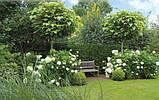 Ландшафтный дизайн сада, фото 4