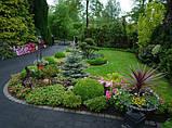 Ландшафтный дизайн сада, фото 9