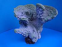 Коралл голубой