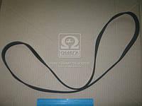Ремень поликлиновый 6PK1548 (производство DONGIL) (арт. 6PK1548), ABHZX