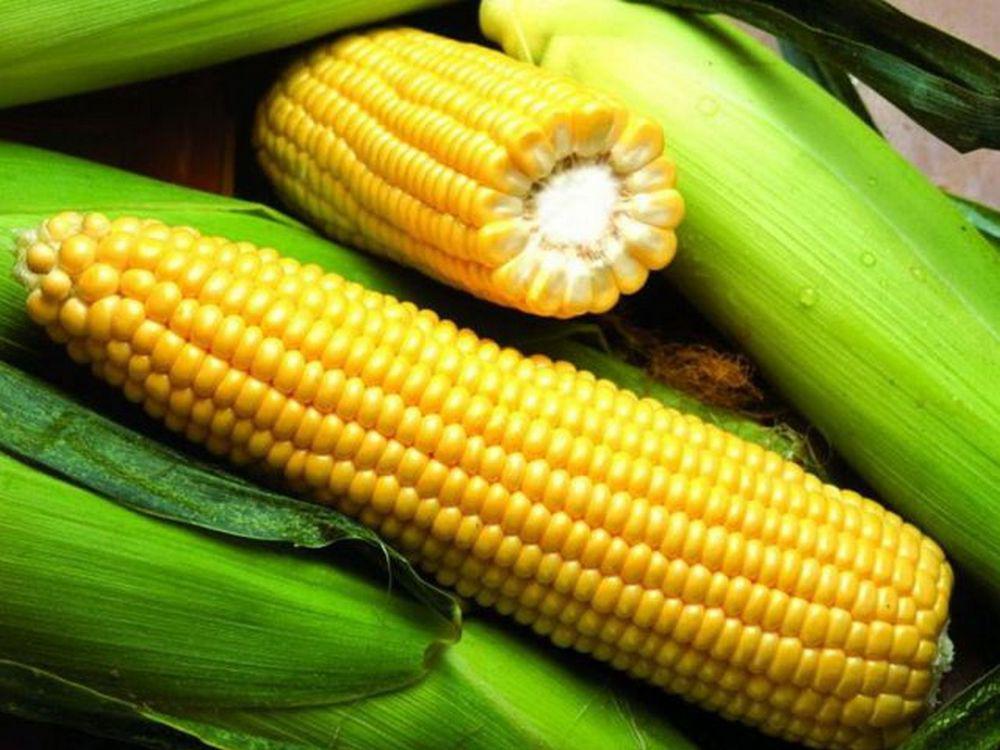 Семена кукурузы Яніс (ФАО 270)