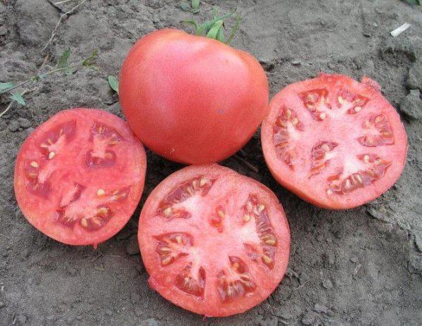 Семена помидора Розализа F1 1000 семян детерминантный
