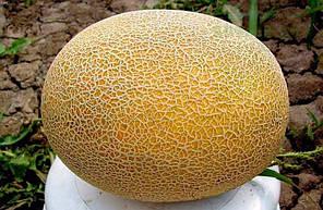 Семена дыни Карамель F1 50 семян (Clause / Агропак +) — ранняя 60 дней, овальная, 2,5 кг, фото 2