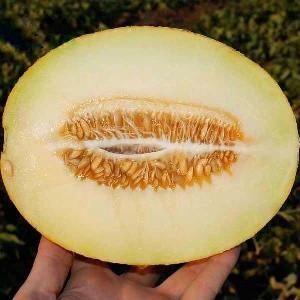 Семена дыни Карамель F1 50 семян (Clause / Агропак +) — ранняя 60 дней, овальная, 2,5 кг