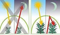 Плівка теплична KRITIFIL® 3797 12 сезонів. Пленка тепличная. Greenhouse Film, фото 1