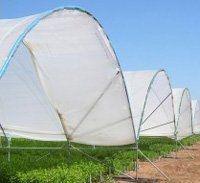 Плівка запроектована для вирощування м'яких фруктів КИТІРІІ.® 2495.XL