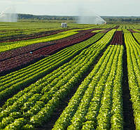 Почва чернозем с полей (верхний слой)