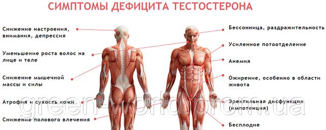 гспг гормон импотенция дисфункция