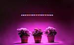 Светодиодное фитоосвещение – быстрый рост растений и экономия средств!