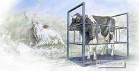 Электронные весы для взвешивания крупного рогатого скота 1.25х2