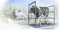 Весы для животных 1000х2000 мм, фото 1