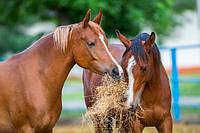 Лечение хромоты у лошадей