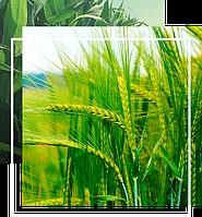 ОЗИМАЯ ПШЕНИЦА/ЯЧМЕНЬ биоТехнология выращивания на 1ГА