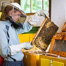 Услуги в области пчеловодства