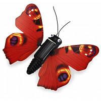 Бабочка на солнечной батареи Цветной