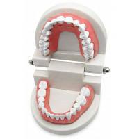 Стоматологическая стандартная модель зубных протезов для обучения детей мульти