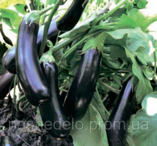 Семена баклажана Эстелле F1  100 семян Rijk Zwaan