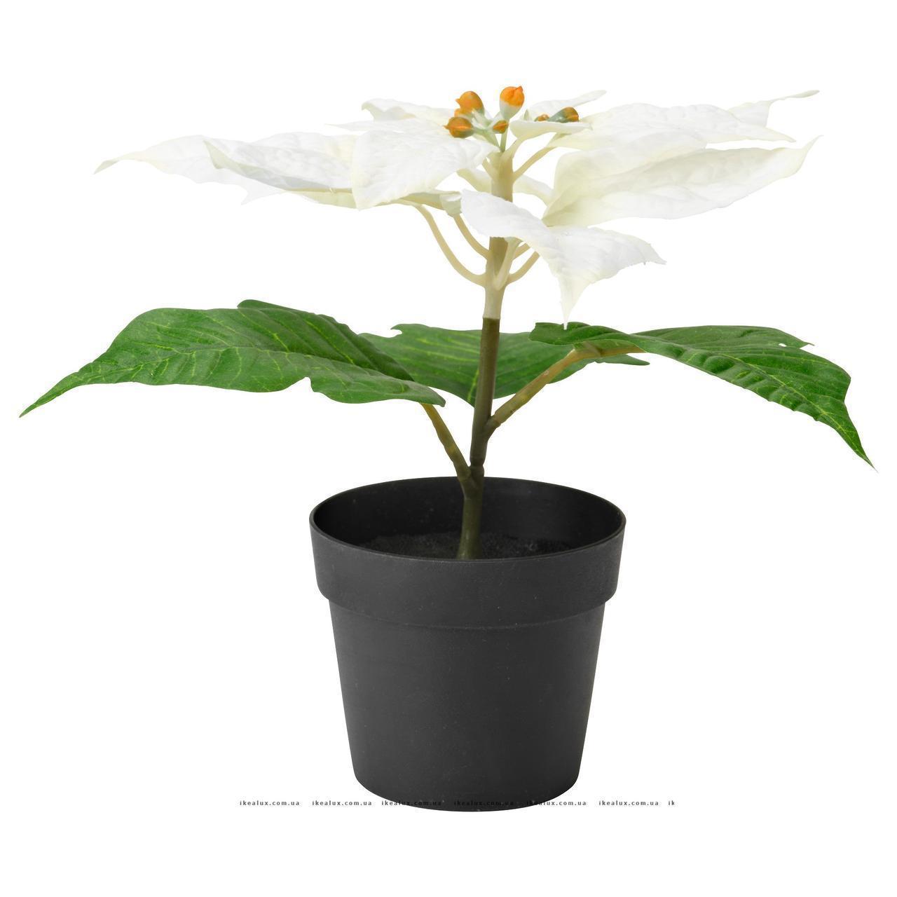 """ФЕЙКА Искусственное растение в горшке, """"Рождественская звезда"""" белый, 90320969, ИКЕА IKEA, FEJKA"""