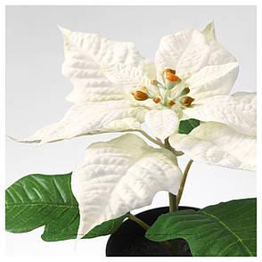 """ФЕЙКА Искусственное растение в горшке, """"Рождественская звезда"""" белый, 90320969, ИКЕА IKEA, FEJKA, фото 2"""
