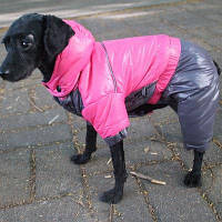 Lovoyager LVC1213 Lovoyager Одежда для собак с четырьмя ногами Зимний комбинезон с капюшоном XL