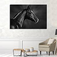 Картина - Черно - белый арабский конь