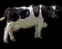 БВМД Дойные коровы 10% , фото 1
