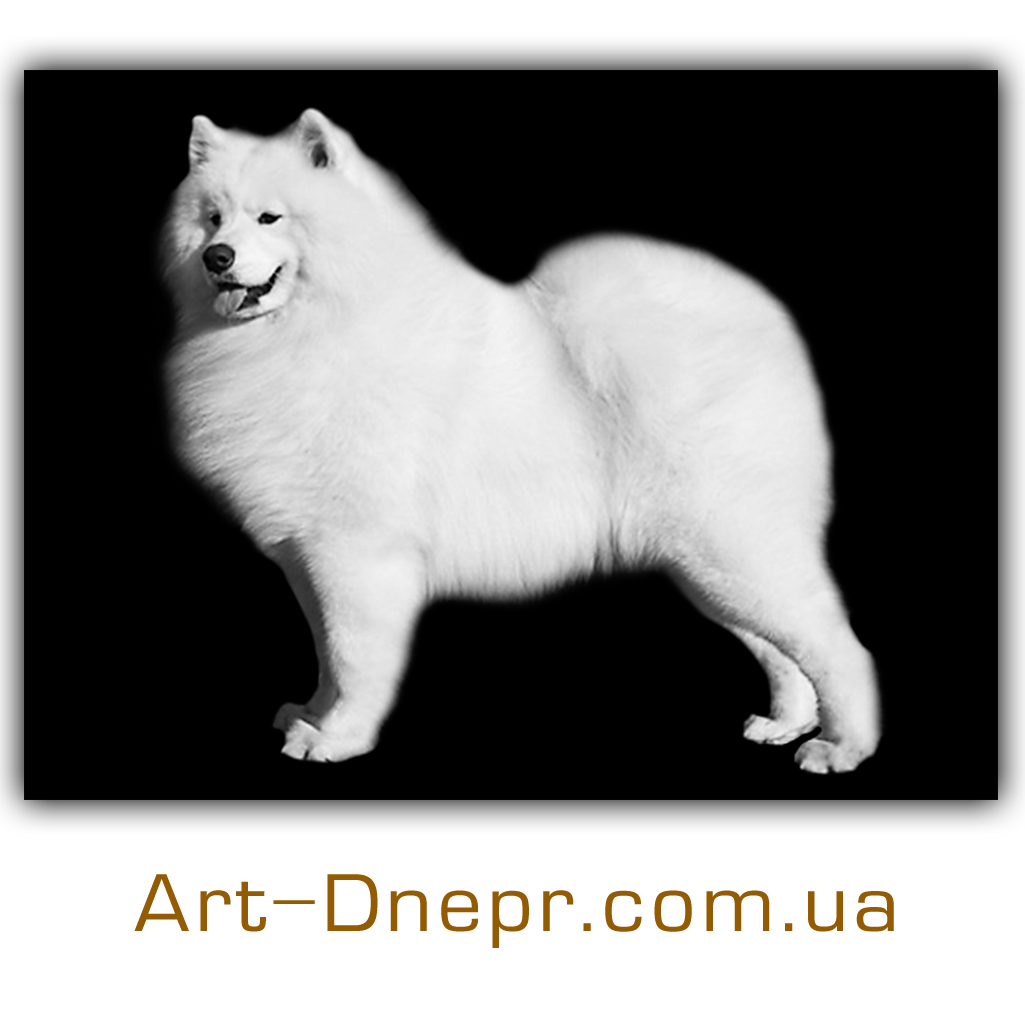 Прямоугольная табличка с фото 200Х300 мм для животного