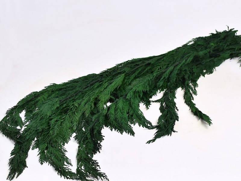 Туя зеленая 100 см 1кг