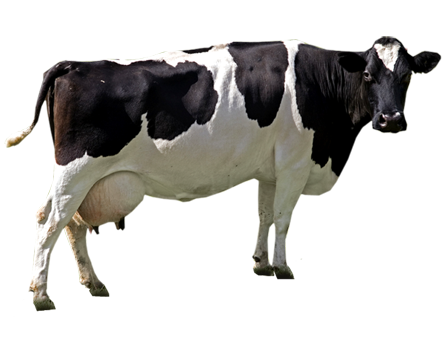 """Премикс """"Дойные коровы"""" 2%"""