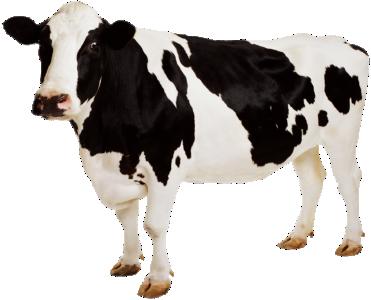 """Премикс """"Сухостойные коровы"""" 2%"""