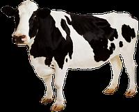 """Премикс """"Сухостойные коровы"""" 2% , фото 1"""