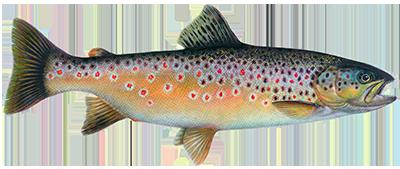 Премикс 2,5% Выращивание для форелевых рыб