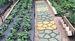 Садова доріжка з допомогою форми своїми руками