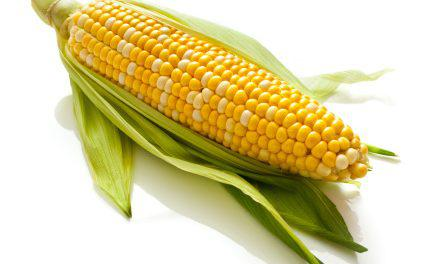 Семена кукурузы Амарок 300 (ФАО 330)