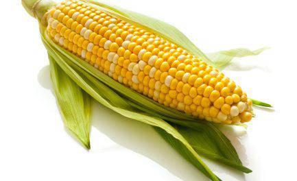 Семена кукурузы Амарок 300 (ФАО 330), фото 2