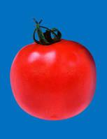 Джампакт F1 - томат детерминантный, 1000 семян, Sakata (Саката), Япония