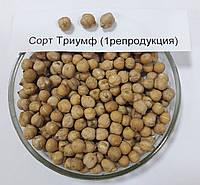 Семена нута Сорт Триумф (1 репродукция)
