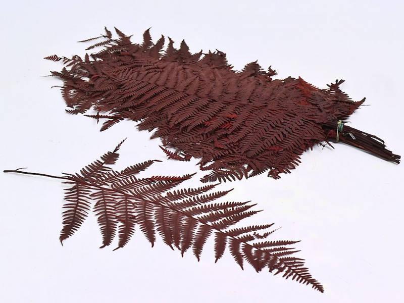 Папоротник красный 50 см 20 листьев