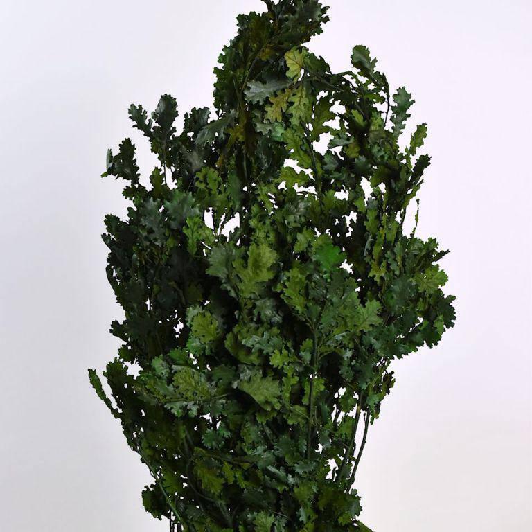 Дубовые листья зеленые 1кг