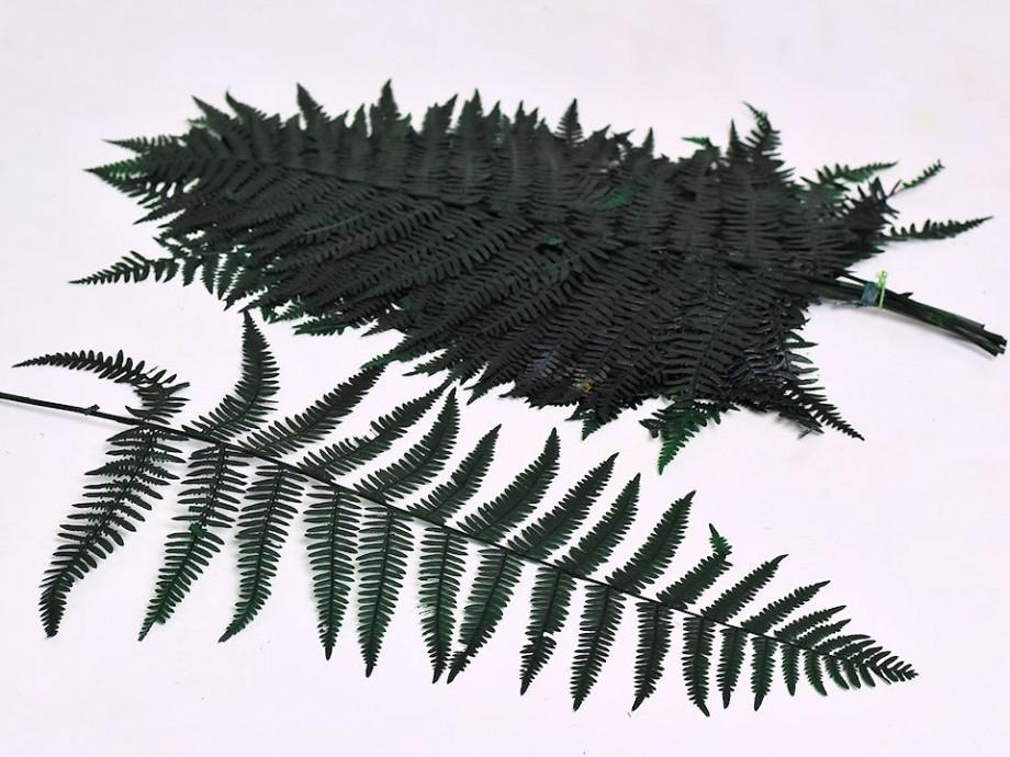 Папоротник зеленый 50 см 20 листьев