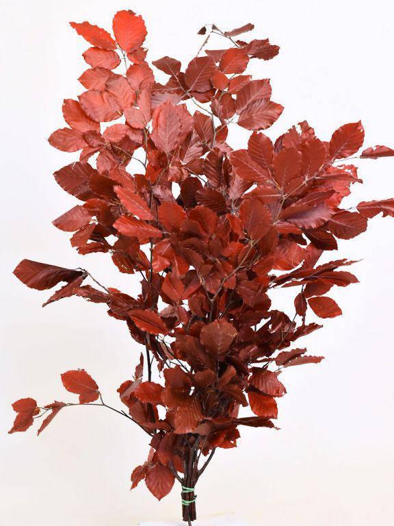 Буковые листья красные 80 см