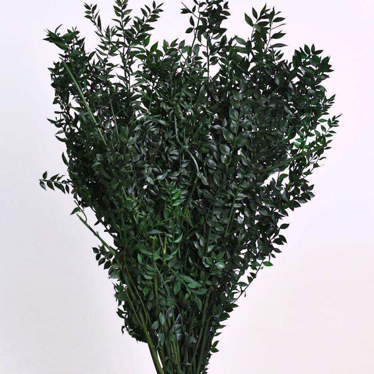 Рускус зеленый 90 см