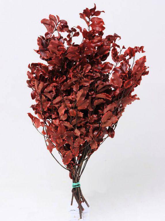Питтоспорум красный 40 см