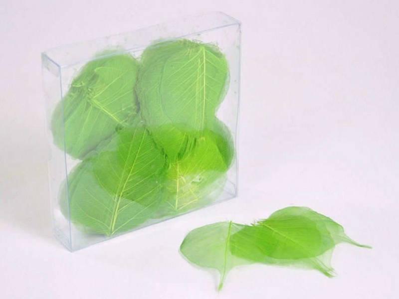 Скелетированные листья салатовые 200 шт.
